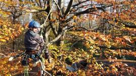 Kletterer in Kirschbaum